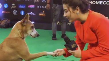 Dog In IIFA Awards: ఐఫా వేడుకులకు అనుకోని అతిథి, ఇంటర్యూ చేసిన నటి ఆదితి భాటియా, వైరల్ అవుతున్న వీడియో, ఇంటర్యూలో ఏం అడిగిందంటే..