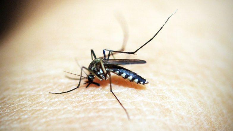 Mosquito Disease Protection Policy: దోమ కుట్టిందా, అయితే మీకు రూ. 10 వేల ఇన్సూరెన్స్, ఏడాదికి కేవలం రూ.99 చెల్లిస్తే చాలు, 40 లక్షల మందికి అందించనున్న ఎయిర్టెల్ పేమెంట్ బ్యాంకు, హెచ్డిఎఫ్2సి ఎర్గో