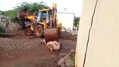 Man Kills Bull With JCB: ఎద్దును అత్యంత క్రూరంగా జేసీబీతో తొక్కించి చంపిన దుండగుడు, వైరల్ అవుతున్న వీడియో, నిందితుల కోసం గాలింపు