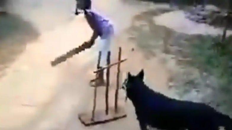Dog Plays Cricket: కుక్క వికెట్ కీపింగ్ అదుర్స్. ధోని పెంపుడు కుక్కలానే ఉందంటున్న నెటిజన్లు, వైరల్ అవుతోన్న ప్రముఖ నటి సిమి గరేవాల్ ట్విట్టర్ షేర్ వీడియో
