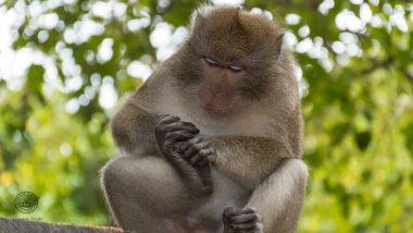 Monkey Fever: ఓరి దేవుడా..మళ్లీ కోతి జ్వరం వచ్చింది, హడలిపోతున్న కర్ణాటక వాసులు, రోజు రొజుకు పెరుగుతున్న కేసుల సంఖ్య, మరణించిన కోతుల ద్వారా వైరస్ వ్యాప్తి, కోతి జ్వరం లక్షణాలు తెలుసుకోండి