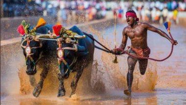 Gowda Faster Than Bolt: ఉసేన్ బోల్ట్ కంటే వేగం మన ఈ మట్టిలో మాణిక్యం, సాంప్రదాయ కంబాల పోటీదారు 100 మీటర్ల దూరాన్ని కేవలం 9.55 సెకన్లలోనే పూర్తి చేసి రికార్డ్