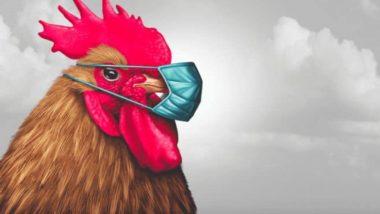'Aggressive Chicken': ఏటీఎం వద్ద మనుషులపై కోడి దాడి, దర్యాప్తు చర్యలు చేపట్టిన వాల్కర్ పోలీసులు, అమెరికాలోని లూసియానాలో ఘటన