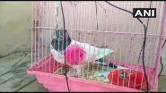 Pakistani 'Spy' Pigeon: సరిహద్దుల్లో అనుమానాస్పదంగా గూఢాచారి పావురం, పాకిస్థాన్ గూఢచార కపోతంగా నిర్థారించిన కథువా జిల్లా ఎస్పీ శైలేంద్రమిశ్రా, ఆర్మీ అధికారులకు అప్పగింత