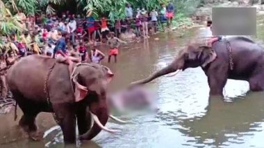 Animal Abuse in Kerala: ఏనుగుతో పాటు కడుపులో బిడ్డను చంపేశారు, బాణసంచా కూర్చిన పైనాపిల్ తిని కేరళలో ఏనుగు మృతి, ఎఫ్ఐఆర్ నమోదు