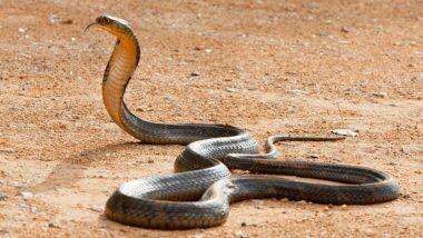 Snake Enters Man's Pants: నిద్రలో మనిషి ఫ్యాంటులో దూరిన పాము, ఏకంగా ఏడు గంటల పాటు నరకం చూపించింది, ఉత్తరప్రదేశ్లో మీర్జాపూర్ జిల్లాలో భయంకరమైన సంఘటన