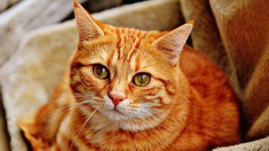 Cats Infected with Covid: వుహాన్లో మళ్లీ కరోనా కల్లోలం, ఈ సారి భారీ స్థాయిలో పిల్లులకు వైరస్, ప్రజలు పెంచుకుంటున్న పిల్లులకు కోవిడ్ పరీక్షలు జరపాలని నిర్ణయం