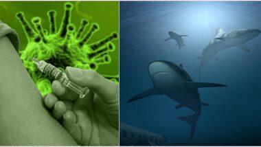 COVID-19 Vaccine: షాకింగ్..కరోనా వ్యాక్సిన్ బయటకు వస్తే 50 లక్షల షార్క్ చేపలు బలి, ప్రత్యామ్నాయం కోసం చూస్తున్న శాస్ర్తవేత్తలు, షార్క్ చేపలను చంపొద్దంటూ సోషల్ మీడియాలో ఉద్యమం
