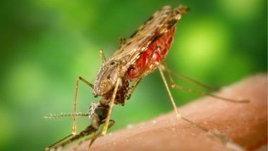 Dengue Fever: కరోనాకు తోడయిన డెంగ్యూ, డిసెంబర్ నాటికి 1000 మందికి పైగా జ్వరాలు, వణుకుతున్న దేశ రాజధాని ఢిల్లీ నగరం, దోమల బెడదను నివారించేందుకు అధికారులు సమాయత్తం