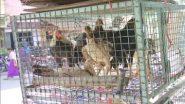 Bird Flu Fear in Telangana: తెలంగాణలో మిస్టరీ వ్యాధి, రెండు గంటల్లో నాలుగు వేల కోళ్లు మృతి, కాల్వ శ్రీరాంపూర్లో నాటు కోళ్లు అకస్మాత్తుగా మృతిపై జిల్లాలో కలకలం, బర్డ్ ఫ్లూ సోకిందనే అనుమానాలు