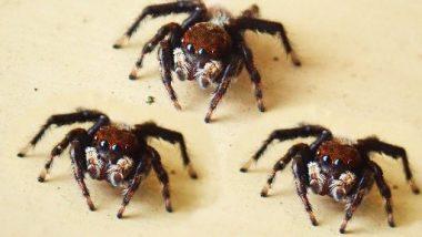 Live Spiders Inside Air Parcel: చెన్నై విమానాశ్రయంలో 107 సాలె పురుగుల పార్సిల్ సీజ్, పోలాండ్ నుంచి అరుపుకొటాయ్కి అక్రమంగా తరలిస్తుండగా పట్టుకున్న చెన్నై కస్టమ్స్ అధికారులు, తిరిగి పోలెండ్కు పంపించేందుకు ఏర్పాట్లు