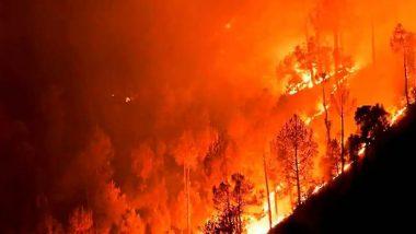 Algeria Wildfires: ఘోర అగ్నిప్రమాదం, 17 రాష్ట్రాలకు అంటుకున్న మంటలు, 42 మంది అగ్నికి ఆహుతి, మరో 14 మంది సైనికులకు గాయాలు, ఉత్తర ఆఫ్రికా దేశం అల్జీరియాలో విషాద ఘటన